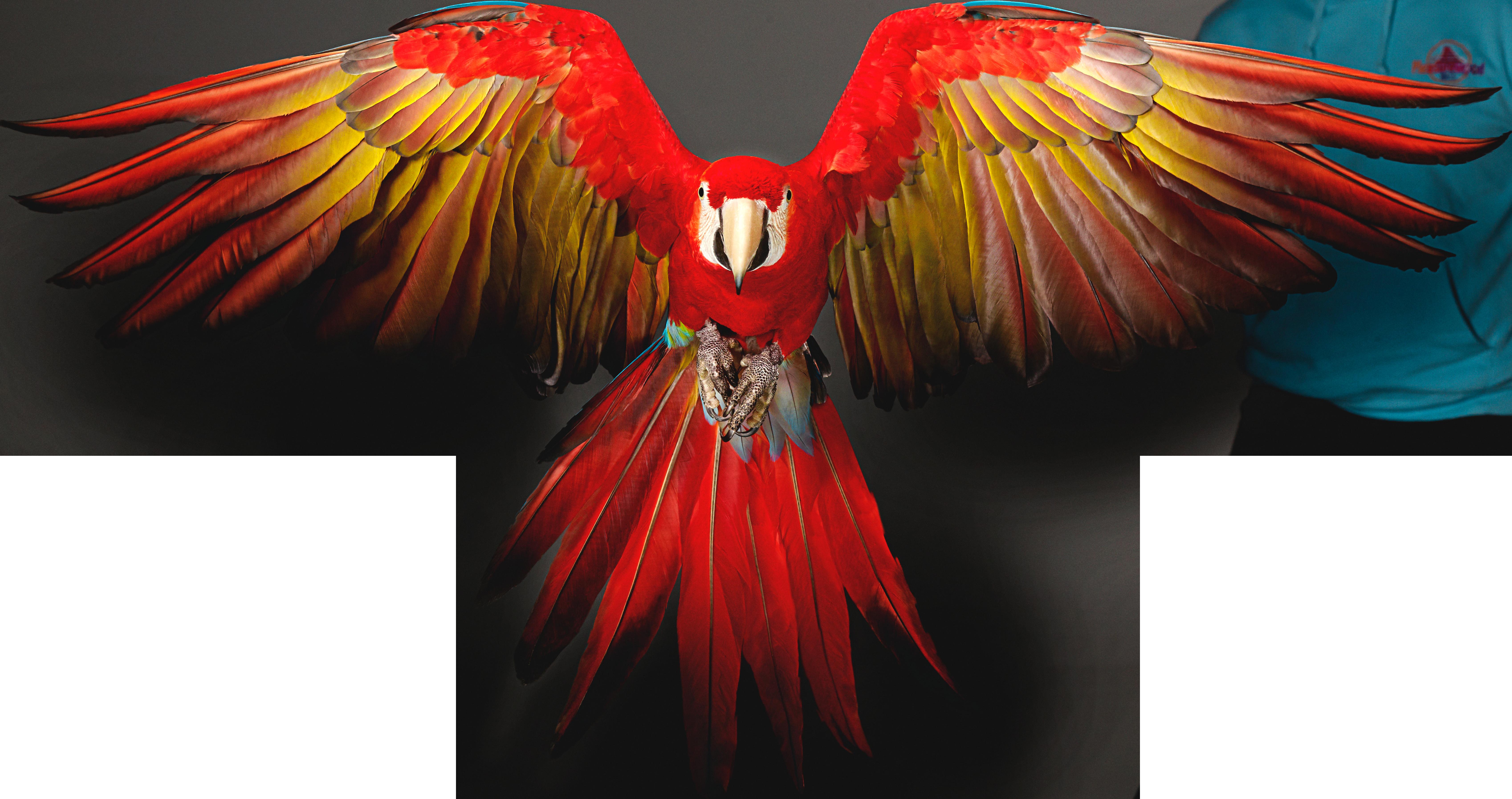100linebird